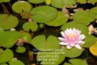 Botanical Garden 08.jpg