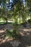 Botanical Garden 13.jpg