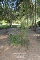 Botanical Garden 14.jpg