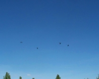 Oct 1st_ Chopper formation passover..JPG